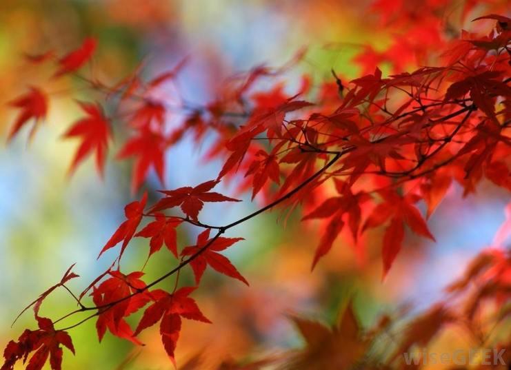 Festive Fall Lighting Ideas